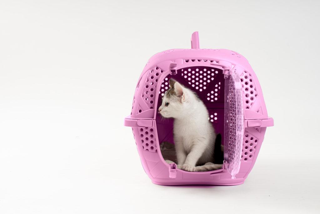 fotografo animali la spezia gattina nel trasportino
