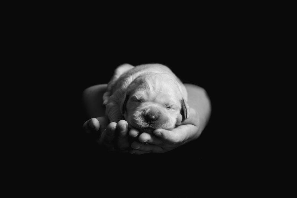 fotografo animali la spezia cucciolo tra le mani di bambino