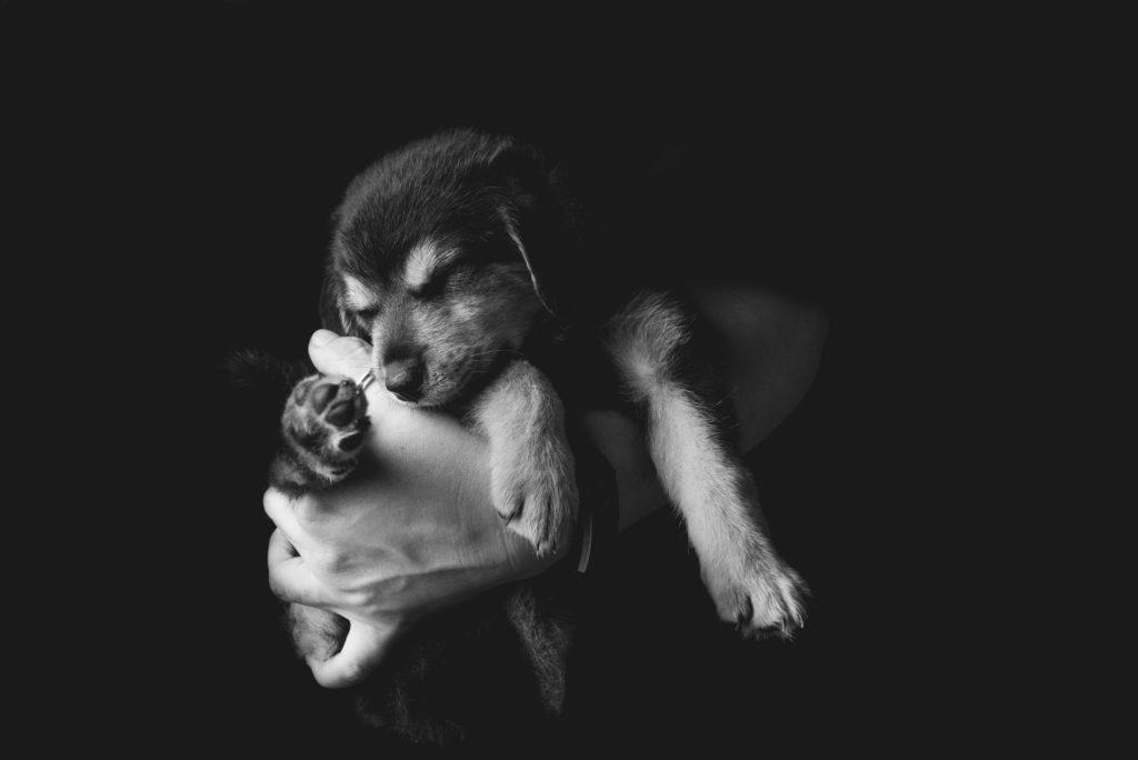 fotografo animali la spezia cucciolo in braccio